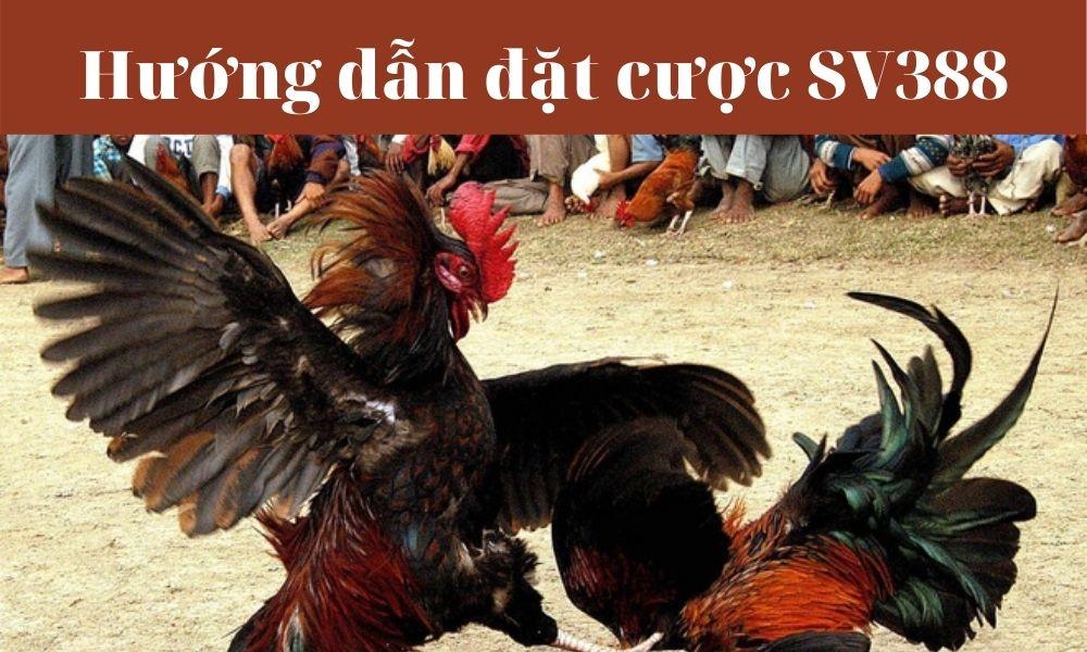 Tham gia cá cược đá gà trực tuyến tại SV388